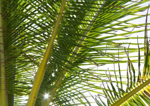 eleuthera island green